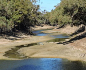 The M.D.B.A's Zombie Water. Menindee Fish Kill. Topher Field (Video)